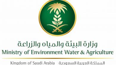 Photo of وزارة البیئة والمیاه والزراعة تعلن أسماء 375 مرشح لوظائف الوزارة